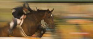 Horse Transportation Lexington KY