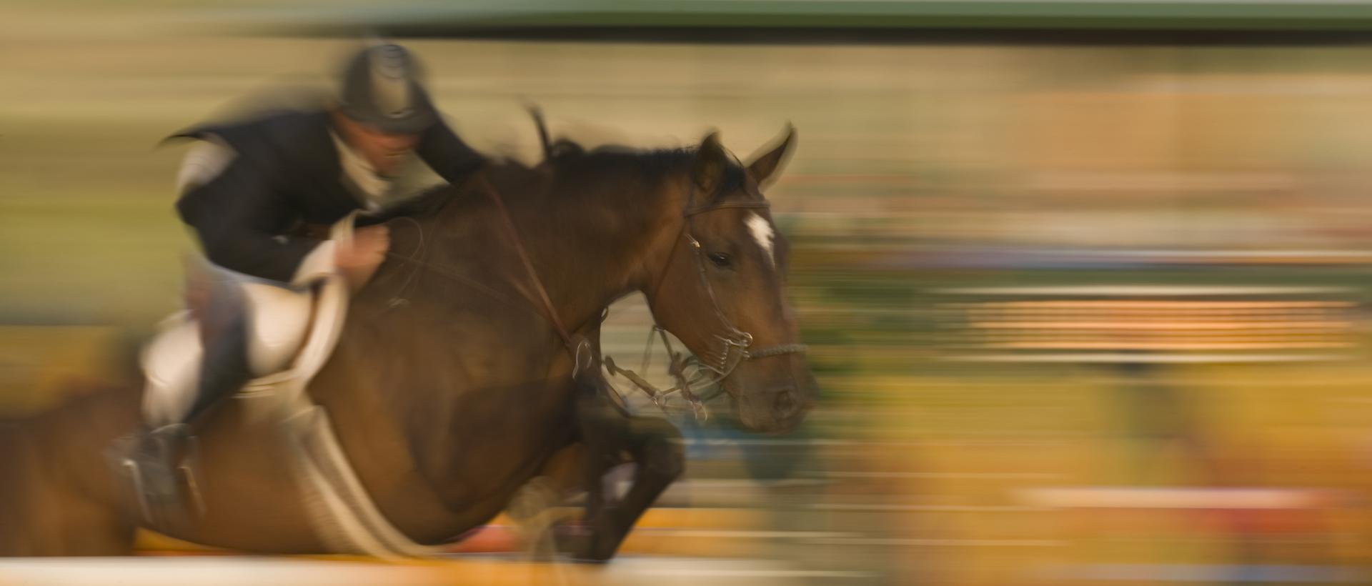 Horse Supplies Lexington Ky